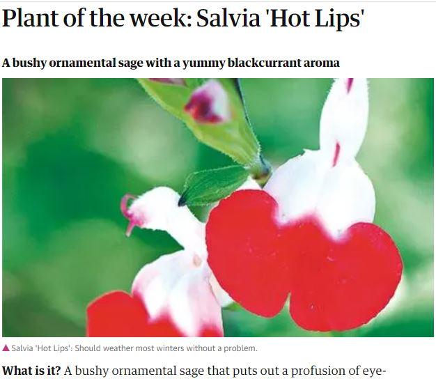 Salah Bunga Mahameru Arya Yang Mekar 400 Tahun Sekali Turnbackhoax