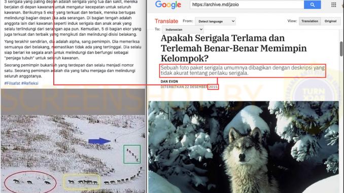 [SALAH] Narasi Keliru di Foto Kawanan Serigala